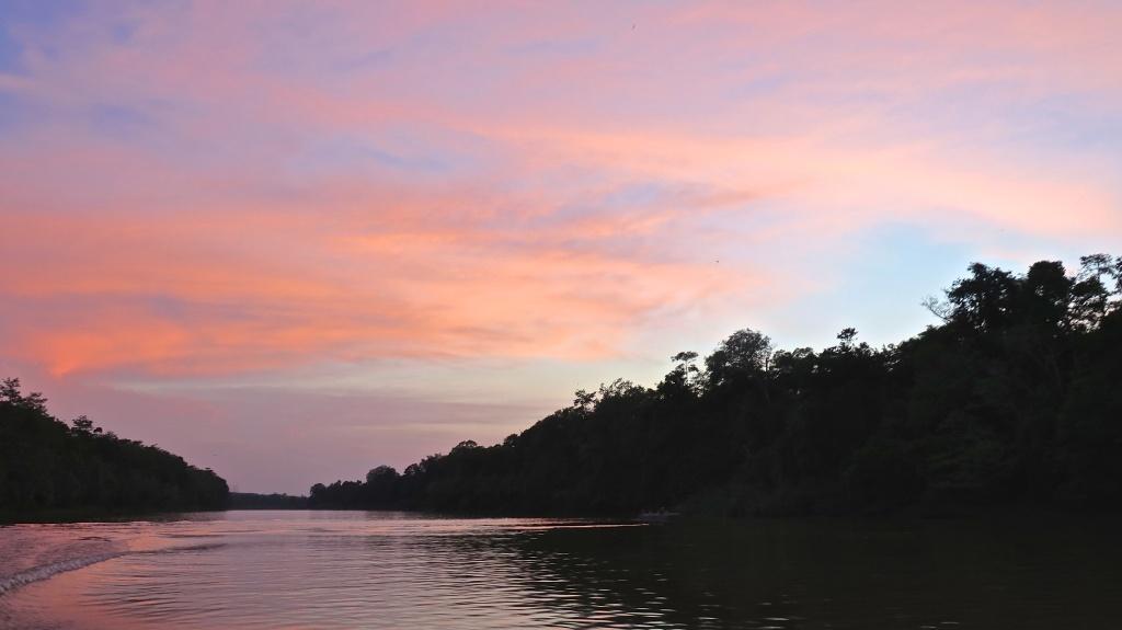 madeau vagabond nature malaysia jungle