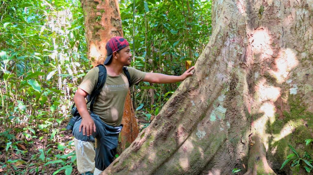 madeau vagabond malaysia sabah jungle