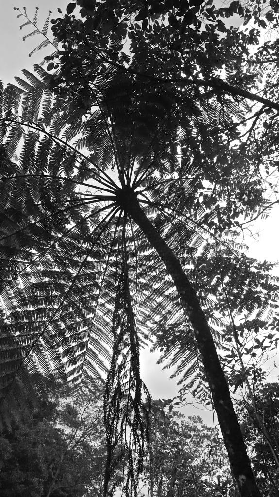 madeau vagabond asia b/w photography